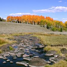 mammoth_creek